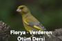 Florya – Verderon Ötüş