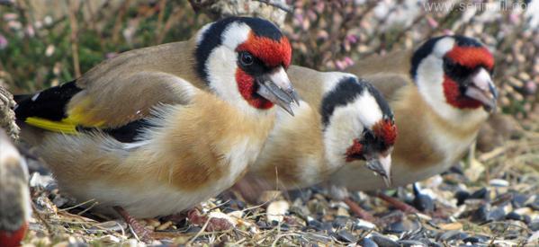 Saka kuşuna nasıl bakılmalı?