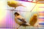 Kuşlarda davranış bozukluğu neden olur?