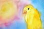 Kuşlarda Güneş Çarpması