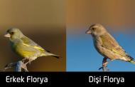 Florya kültürü hakkında