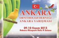 Ankara Ornitholoji Derneği Ankara Yarışması - 2013